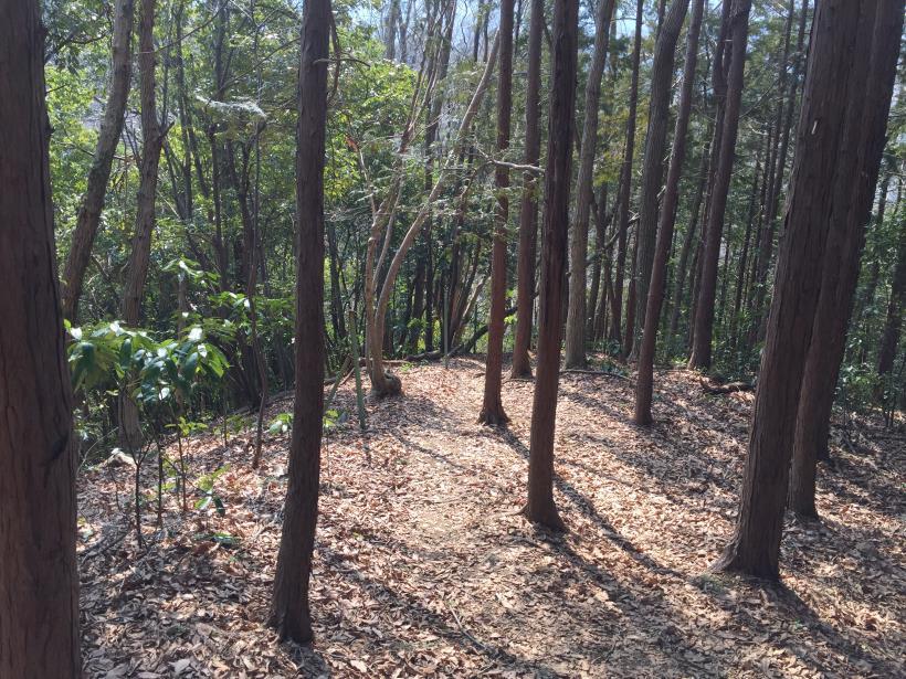 arashiyama74.jpg