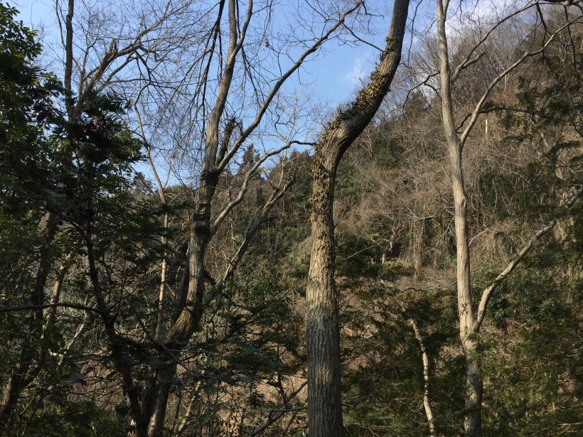 arashiyama80.jpg