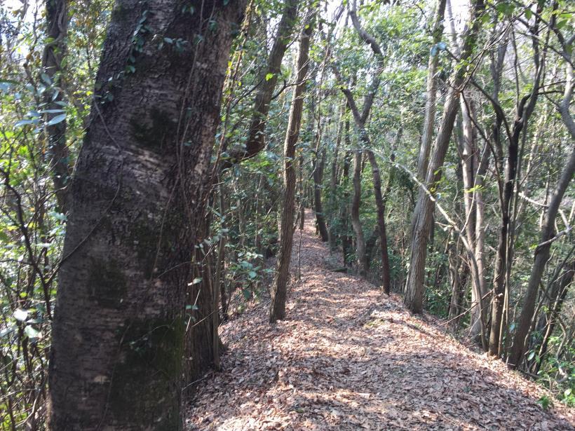 arashiyama81.jpg