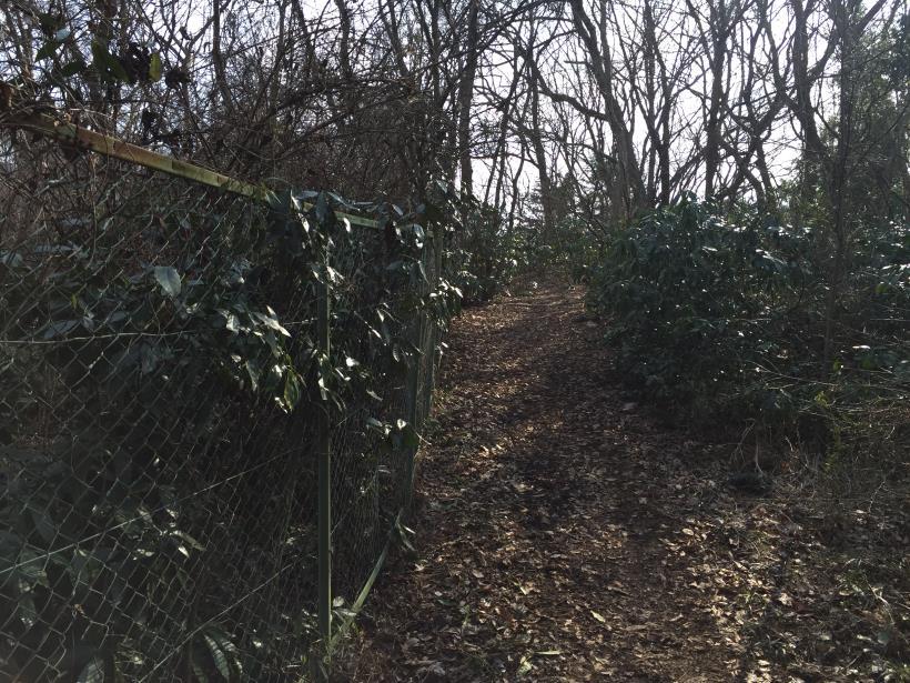 arashiyama99.jpg