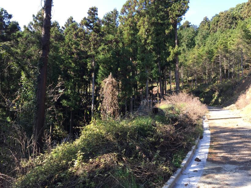 katsumineyama50.jpg