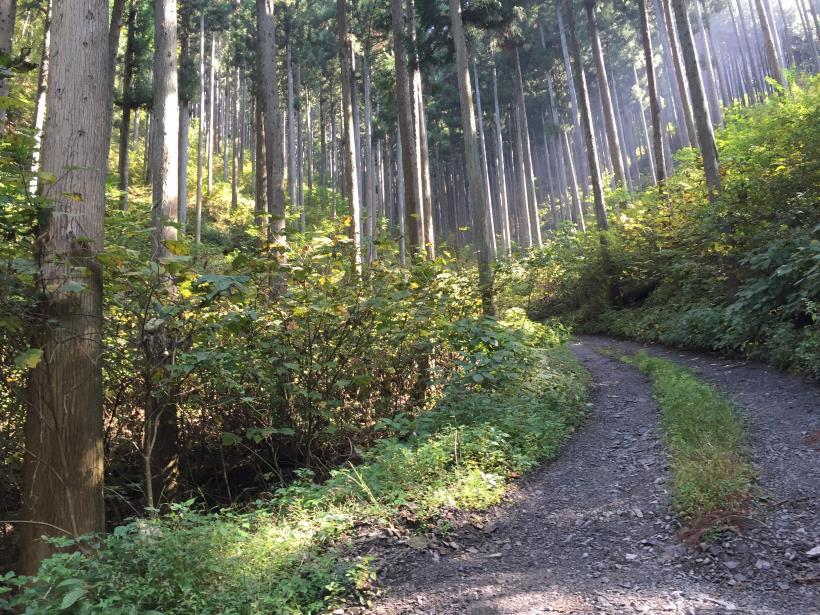 kosakashimisouha130.jpg