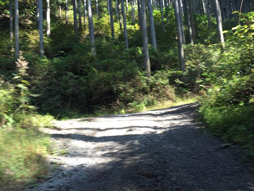 kosakashimisouha132.jpg