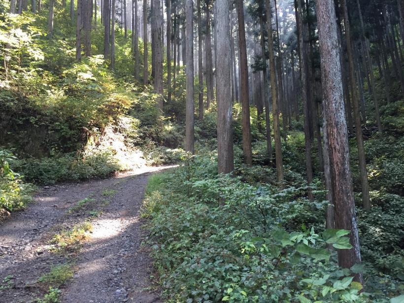 kosakashimisouha137.jpg