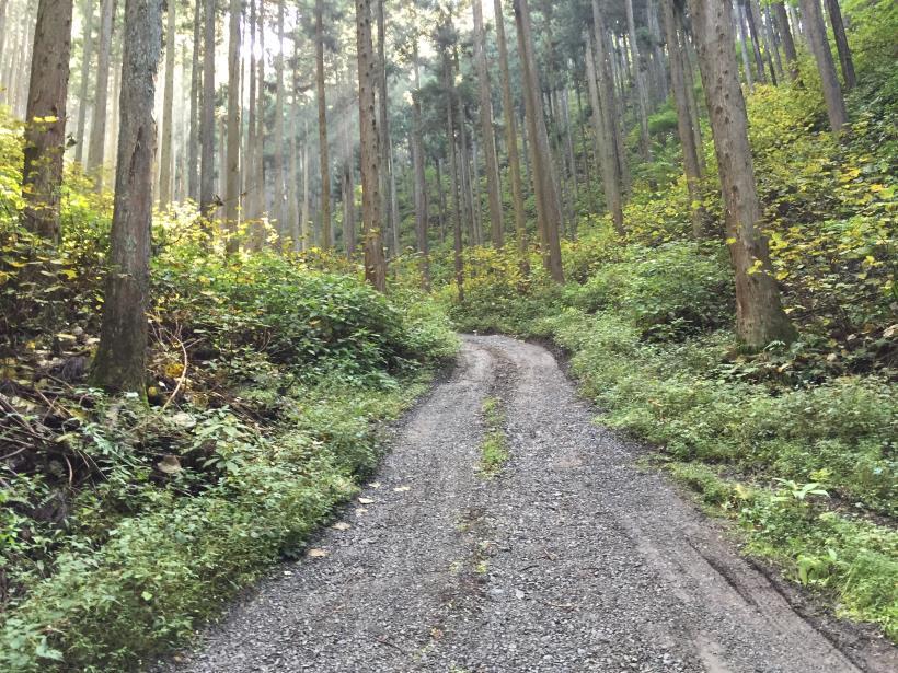 kosakashimisouha140.jpg