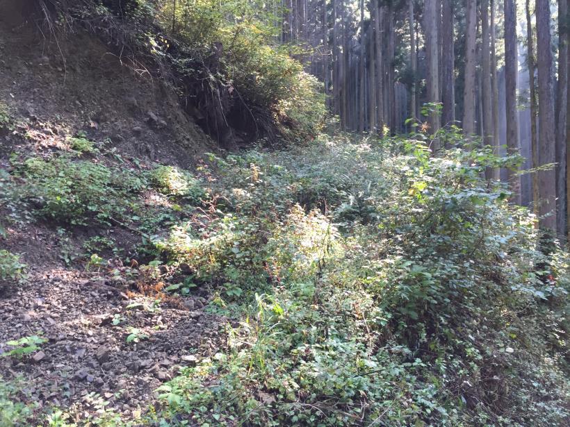 kosakashimisouha145.jpg