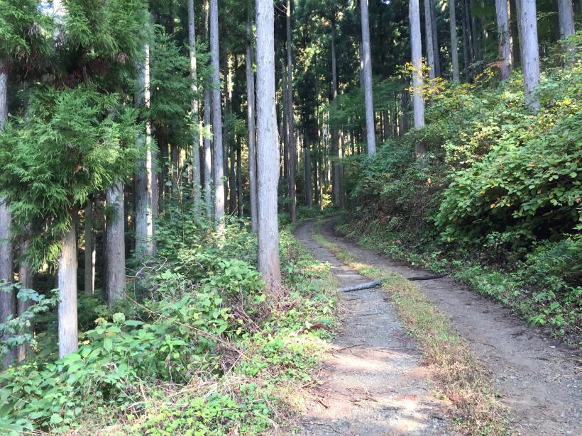 kosakashimisouha148.jpg