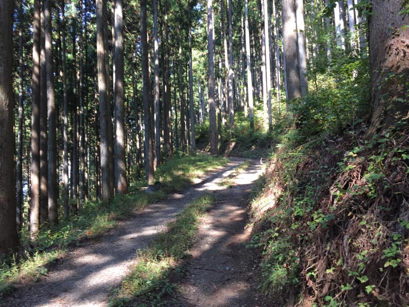 kosakashimisouha150.jpg