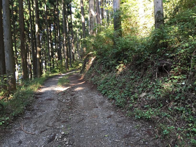 kosakashimisouha152.jpg