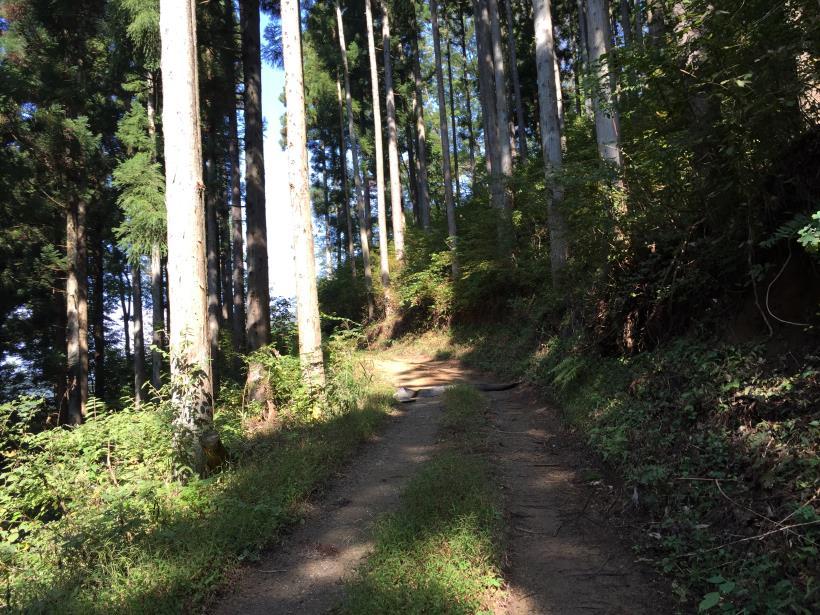 kosakashimisouha154.jpg