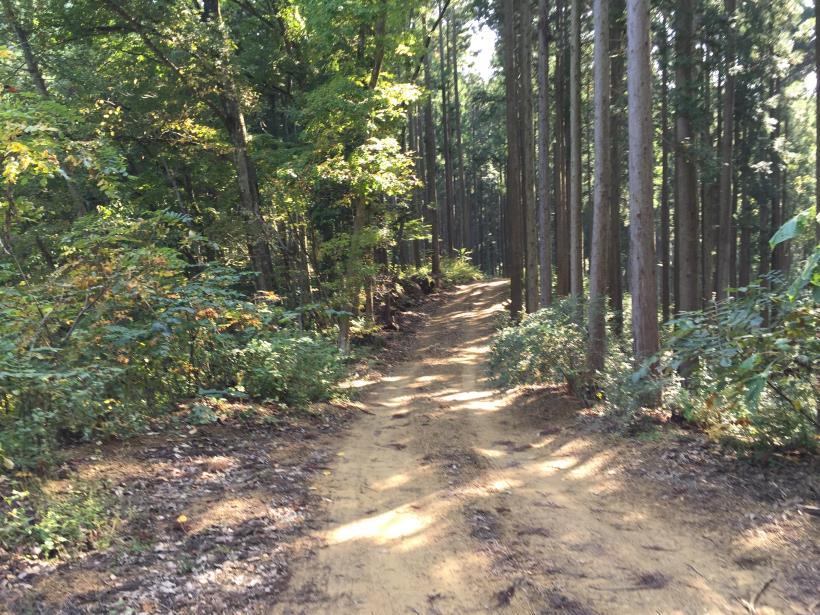 kosakashimisouha170.jpg
