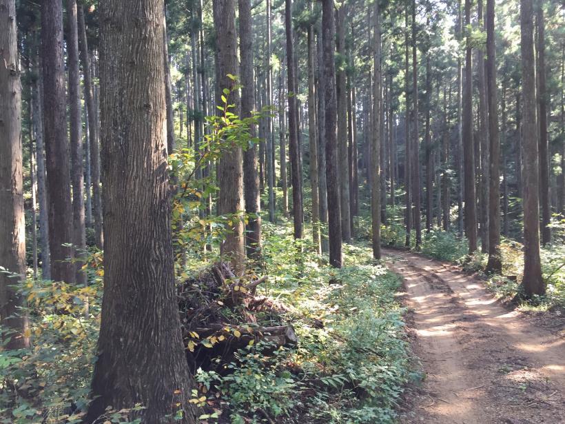 kosakashimisouha171.jpg