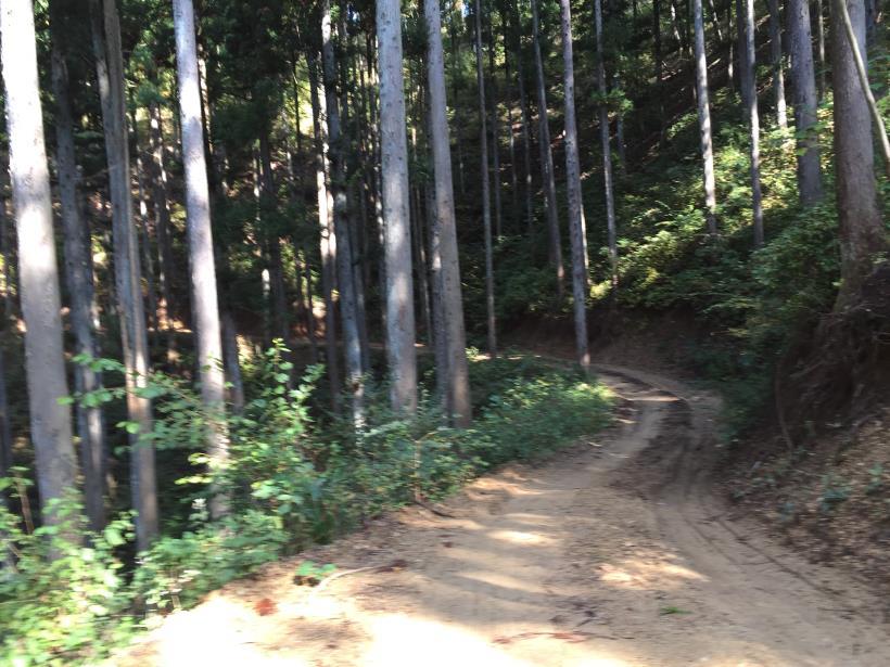 kosakashimisouha178.jpg