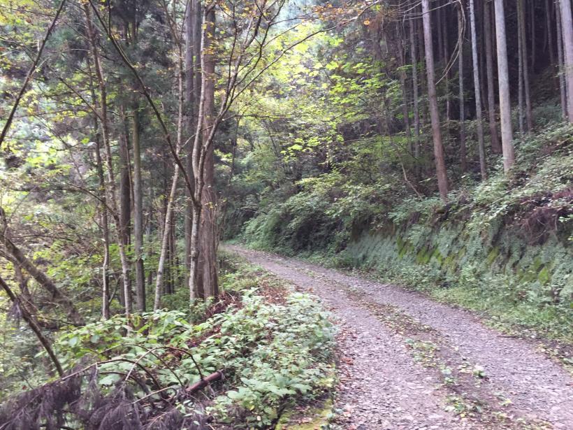 kosakashimisouha18.jpg