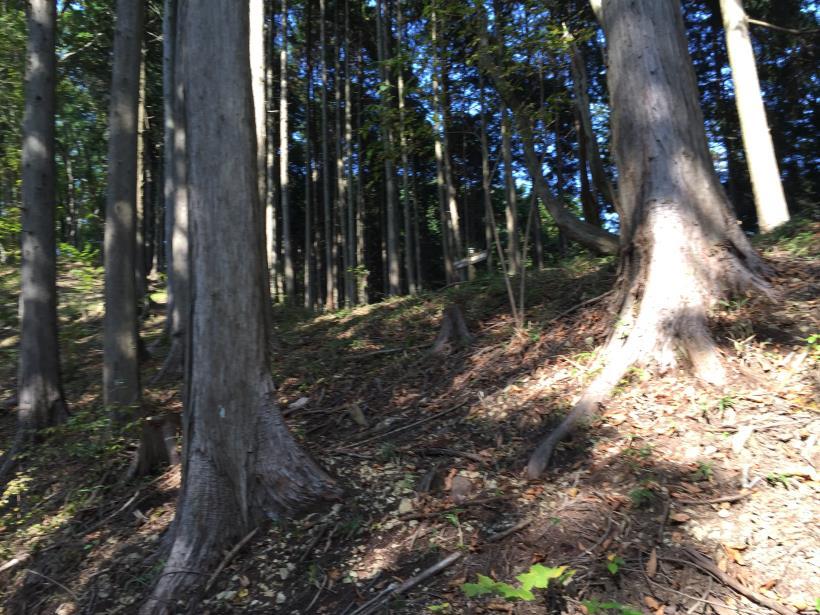 kosakashimisouha214.jpg
