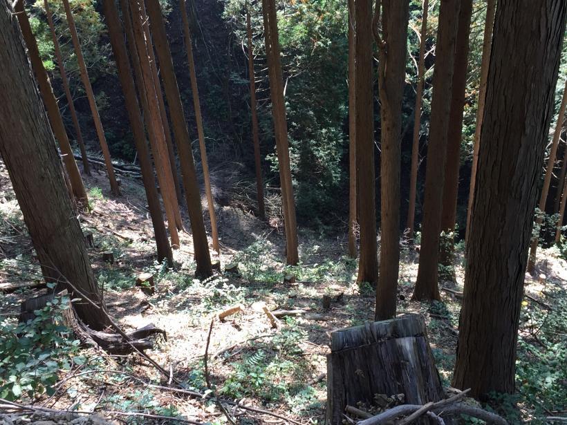 kosakashimisouha217.jpg