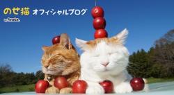 のせ猫オフィシャルブログ