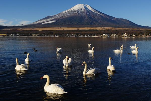 2016.01.13.富士山 P1400735
