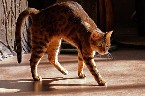 猫カフェ  DSCF6841