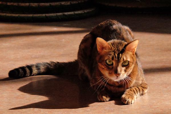 猫カフェ DSCF6843