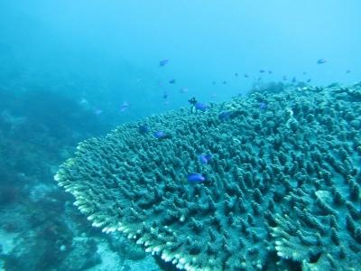 11-16 サンゴ
