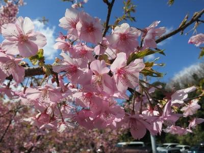 02-26 桜