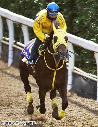 【競馬ネタ】46年ぶり栃木県産馬のG1制覇なるか?ボールドライトニングが朝日杯に挑戦