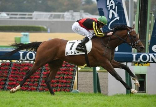 【競馬】ハートレー、共同通信杯で始動し皐月賞へ直行