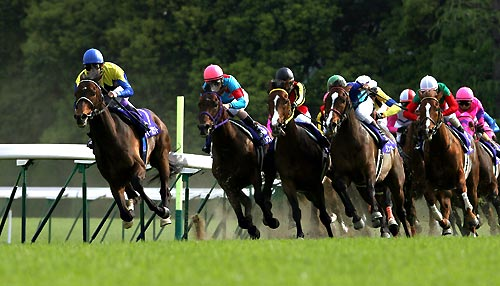 【競馬ネタ】春天、宝塚、秋天、JC、有馬のそれぞれの最強馬を考えてみた