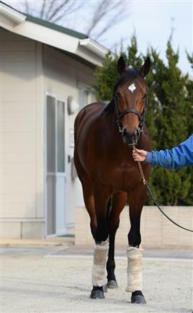 【競馬】岡田総帥「サトノダイヤモンドは筋肉に力が足りない」