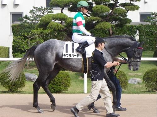【競馬】ラブラバードで人災で引退・・・キャロット出資者おこ