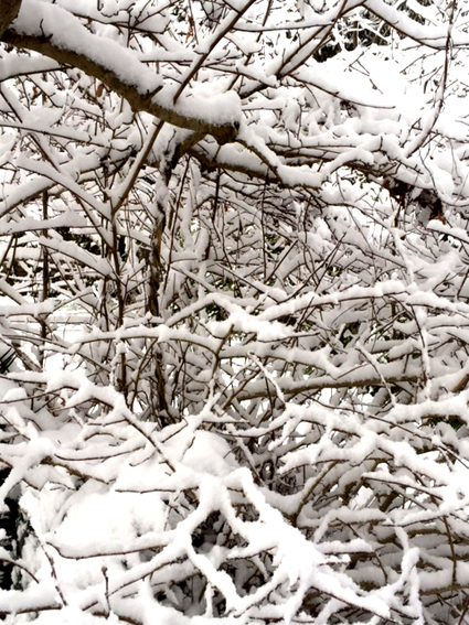 2016雪