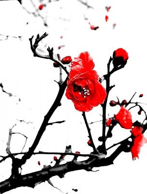 16-02-09-19-36-15-935_deco.jpg