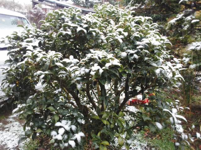 雪降り (1)