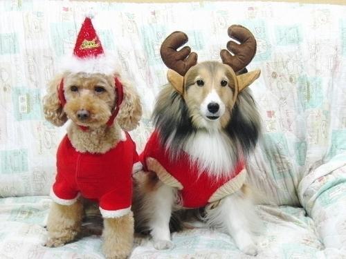 2015年のクリスマス