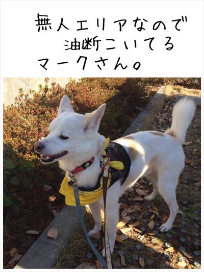 2015-12-29-001.jpg