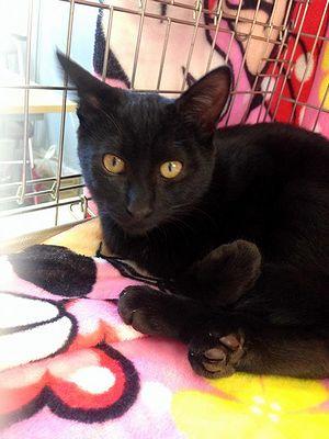 LYSTA黒猫