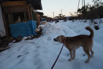 2016.1.22 葛尾村&都路 ぽこ 25