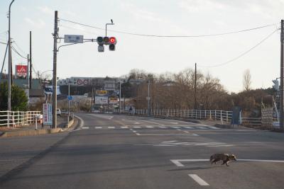 2016.2.5 浪江町・都路 ぽこ 27