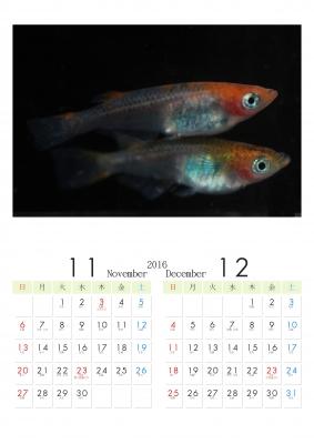 20161112.jpg