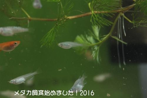 IMG_0259_20160212082327cdd.jpg
