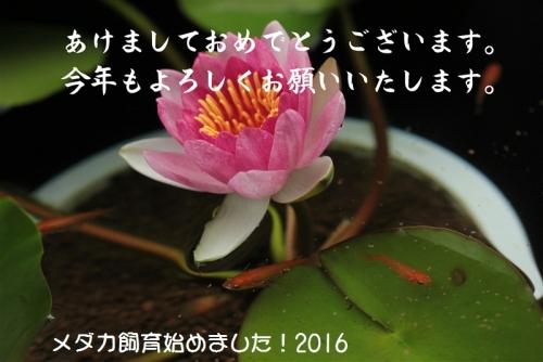 IMG_0547_20160101083658e14.jpg