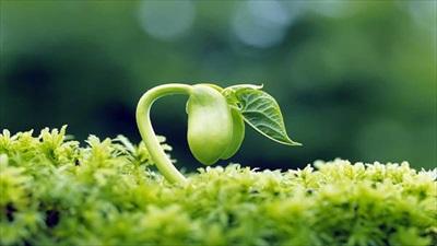 rewallpaper-spring-photo-01.jpg