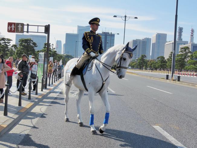 皇居の白い馬