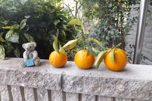 今年も橙が届く