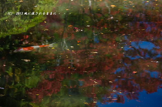 2015年10月撮影 奈良・円成寺の紅葉6