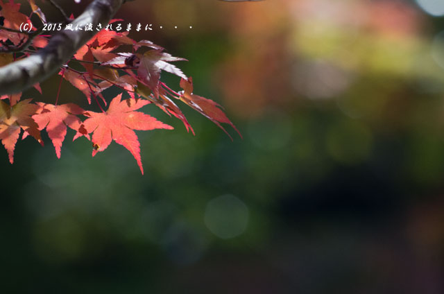2015年10月撮影 奈良・円成寺の紅葉7