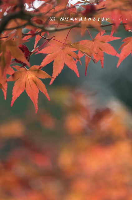 2015年10月撮影 奈良・円成寺の紅葉8