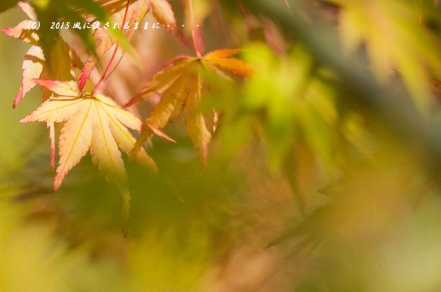 2015年10月撮影 奈良・円成寺の紅葉9