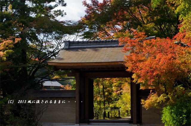 2015年10月撮影 奈良・円成寺の紅葉4